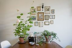 Sandra Juto- love the arrangement of the frames, paired with the greenery