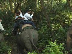 Imagini pentru imagini din jungla Classroom, Animals, Class Room, Animales, Animaux, Animal, Animais