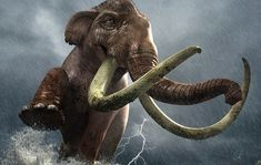 Millennia ago the Columbian Mammoth strode across Texas stripping the bark from trees by Fred Gambino Extinct Animals, Prehistoric Animals, North American Animals, Cave Bear, Dinosaur Fossils, Anthropologie, Fauna, Wildlife Art, Elephant