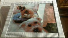 Dit zijn mijn hondjes heb ze op een schilderij heb bij Anja Vloet gemaakt