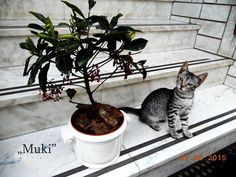 Gardening, Cats, Animals, Gatos, Animales, Animaux, Lawn And Garden, Animal, Cat