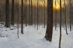 Winter Woods by Steven Hileman Oil ~ x 21st Century Artists, Painting Competition, Winter Painting, Online Painting, Winter Landscape, Tree Art, Landscape Paintings, Snow, Gallery