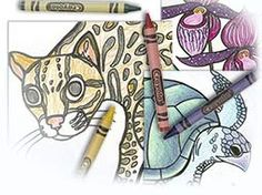 Free Beautiful Coloring pages on Rain Forest Birds, Amphibians and Animals.  Groove Billed Ani  Spectacled Owl  Quetzal  Poison Dart Frog  Amazon River Dolphin  Capybara  Black Howler Monkey  and, and, .....