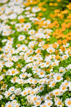 """I just love daisies. They're so friendly. Don't you think daisies are the friendliest flower?"" - Meg Ryan in You've Got Mail"