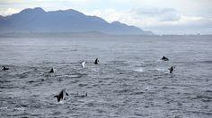 Delfines Fitzroy