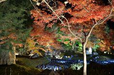 2013/ 11/26  嵐山  宝厳院