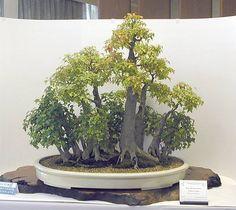 Bonsai forêt