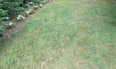 Late Summer Steps for Total Lawn Renovation