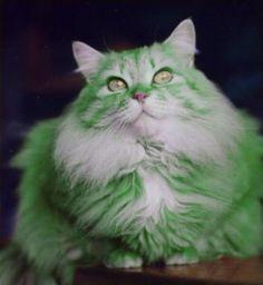 The Genetics of Green Cat