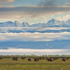 Colorado's ranch trail: Grass-fed, natural food