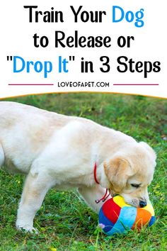 """As a pet owner, having an idea of how to teach your dog the """"drop it"""" command is very important. This command is beneficial in so many ways. Pet Dogs, Dogs And Puppies, Dog Kennel Designs, Dog Care Tips, Pet Care, Dog Commands, Dog Training Techniques, Dog Hacks, Training Your Dog"""