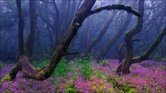 Garajonay National Park, Gomera, Canary Islands (photo by Francisco Mingorance)