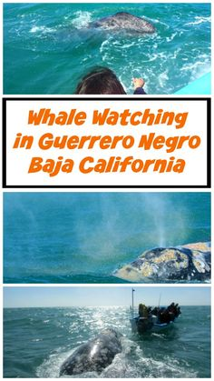 Whale Watching In Ojo de Liebre Lagoon, Guerrero Negro, Baja California Sur, Mexico. FInd out how you can plan your own trip.