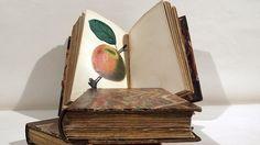 Verfasser des dreibändigen Werks aus dem Jahr 1941 ist der englische Botaniker John Lindley. Thema ist der Obstanbau unter den klimatischen Bedingungen Großbritanniens. Wert: 4.000 Euro.