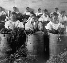 Filipino girls stripping leaves for cigar manufacture. Philippines Culture, Manila Philippines, Old Photos, Vintage Photos, Philippine Holidays, Filipino Girl, Filipino Culture, Girls Stripping, Les Continents