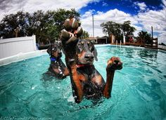 More dogs swimming. Love!