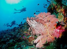 Astonishing finding: coral reef thriving amid 'ocean acidification ...