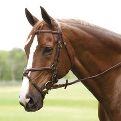 Antares Figure 8 Bridle! love the bridle and loooove the horse!