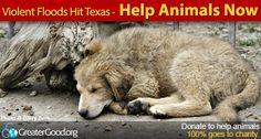 Disastrous Floods Overwhelm Texas and Oklahoma - Help Animals Now