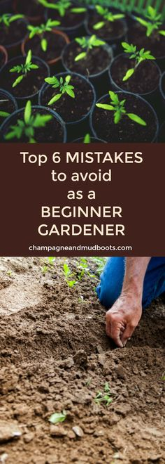 This article provides the top mistakes of my beginner gardener experience and how you can avoid them to have a better vegetable garden.