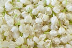 Jasmine Essential Oil Health and Anti-Aging Benefits: Jasmine oil has aphrodisiac property which helps enhance libido. It also helps cure problems such as premature ejaculation, frigidity, impotency etc. Beautiful Flowers Images, Flower Images, All Flowers, Flower Photos, Pretty Flowers, Fresh Flowers, White Flowers, Flowers Pics, Nice Flower