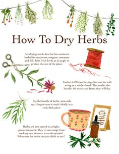 green witchcraft madisonsaferillustration: A how to for drying herbs. There are tons of methods, as everything in herbalism. This one works well for me! Witchcraft For Beginners, Green Witchcraft, Herbal Magic, Magic Herbs, Healing Herbs, Medicinal Herbs, Drying Herbs, Smudge Sticks, Book Of Shadows