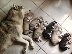All creatures great and small ;) Mama dog and pups