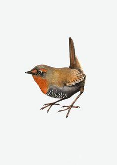 Chucao / Scelorchilus rubecula Birds Painting, Celestial Art, Bird Sketch, Art, Colorful Birds, Watercolor Bird, Cute Drawings, Watercolour Inspiration, Bird Art