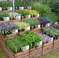 Backyard Vegetable Gardens, Veg Garden, Vegetable Garden Design, Garden Shop, Outdoor Gardens, Garden Tools, Garden Ideas, Farm Nursery, Garden Nursery