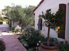 My Garden - Spanish Revival - Mediterranean - Landscape - Orange County - My Garden