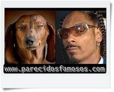 Parecidos con famosos: Snoop Dogg con Cachorro