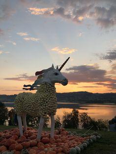 Das Einhorn aus Kürbissen steht auf dem Juckerhof. Es gehört zur Kürbisausstellung Fabelwesen. Giraffe, Animals, Magical Creatures, Unicorn, Wood Carvings, Woodland Forest, Sculptures, Felt Giraffe, Animales