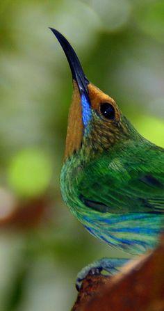 Hummingbird by Maggie McLaughlin