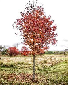 Resultado de imagem para paisagem outono curitiba