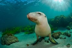 Sea Lion Pup. Credit: Michael Oneill