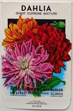 Vintage Dahlia Seed Packet.
