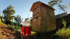 Flow Hive™ - Honey on tap directly from the hive! The Flow Hive allows bee-keepers to extract honey from their hives with minimal disturbance to the bees - amazing! New Beehive, Hive Home, Harvesting Honey, Beehive Design, Bee Hive Plans, Raising Bees, Hobby Farms, Save The Bees, Bee Keeping