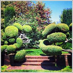 Unusual topiary at magical Filoli Garden