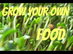 Easiest Way To Grow Your Own Food
