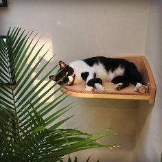 Free Shipping Closeout  Corner Cat Shelf  Cat Perch  Cat