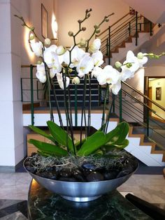 Flowers Drawings Inspiration : White Phalaenopsis orchids planted in brushed stainless steel bowl with polished Orchid Flower Arrangements, Orchid Planters, Orchid Centerpieces, Orchid Pot, Artificial Orchids, Phalaenopsis Orchid, Deco Floral, White Orchids, Purple Orchids