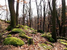 v lese....