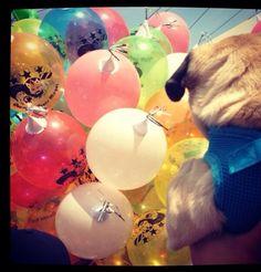 Escogiendo el globo para reyes