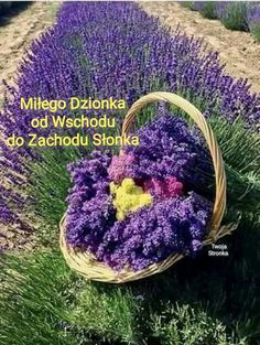 Purple flowers are a great way to add interest to your yard or landscape. Here are Different Types of Purple Flowers for Your Garden and Purple Flowers Meaning. Lavender Cottage, Lavender Scent, Lavender Fields, Lavender Color, Lavender Flowers, Purple Flowers, Beautiful Flowers, Perfume Floral, Growing Lavender