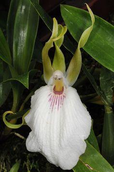 Beautify Your Garden With Orchids Rare Ideas Best Orchids Ideas) - Gartenpflanzen. Strange Flowers, Unusual Flowers, Rare Flowers, Amazing Flowers, Beautiful Flowers, Weird Plants, Unusual Plants, Exotic Plants, Arrangements Ikebana