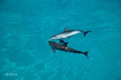 Dolphins are usually together, hanging out in the pod, it's all about connection and #oneness #onelove #onepod #bucketlist #swimwildolphin #bimini #TheBahamas