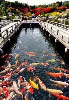 C'est beau poissons sont bien beau et bien installer