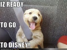 funny dog pictures - IZ READY TO GO  TO DISNEY!