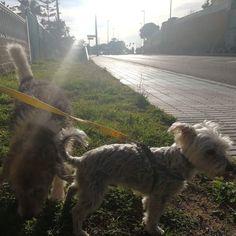 #Paseo con #Cuqui #Robin 🐶 03/18 * * #Disfrutar #enjoying #enjoy #disfrutamos #Disfrutandoeldía #DisfrutandoAndo #Fotos #fotografia #photography #Foto #Photo #Peludos #Mascotas #Perros #Dog #Mascottes #Pets #Mascot #Dogs #Shaggy #Furry #Hairy #Ilovedog #Dog #Gatos #Cats #gato #Ilovecats #Noalabandono #adoptanocompres #RincóndelaVictoria