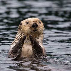 US Dept of Interior Photo of the Day. U.S. Department of the on Instagram: Guess whos excited about Sea Otter Awareness Week!...